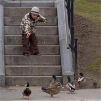 duckfeeding.jpg