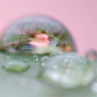 rainyrose.jpg