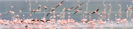 africaday6flamingo.jpg